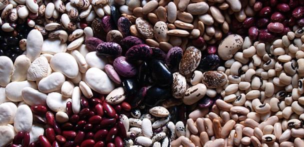Con innovación buscan aumentar consumo de legumbres en Chile