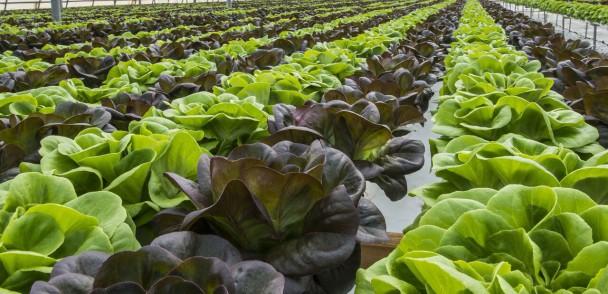 3 puntos a desarrollar por los productores de hortalizas