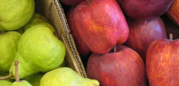 Dubai Exports explora la industria chilena de frutas frescas, se reune con ASOEX