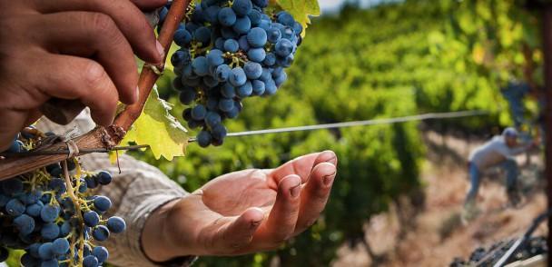 ASOEX inicia el estudio sobre desafíos de las nuevas tendencias de la fruticultura