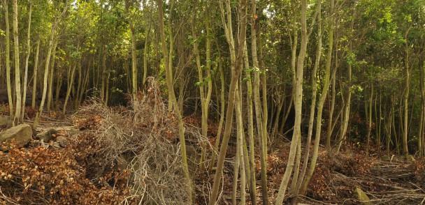 Por una producción forestal sustentable alianza público-privada firma APL