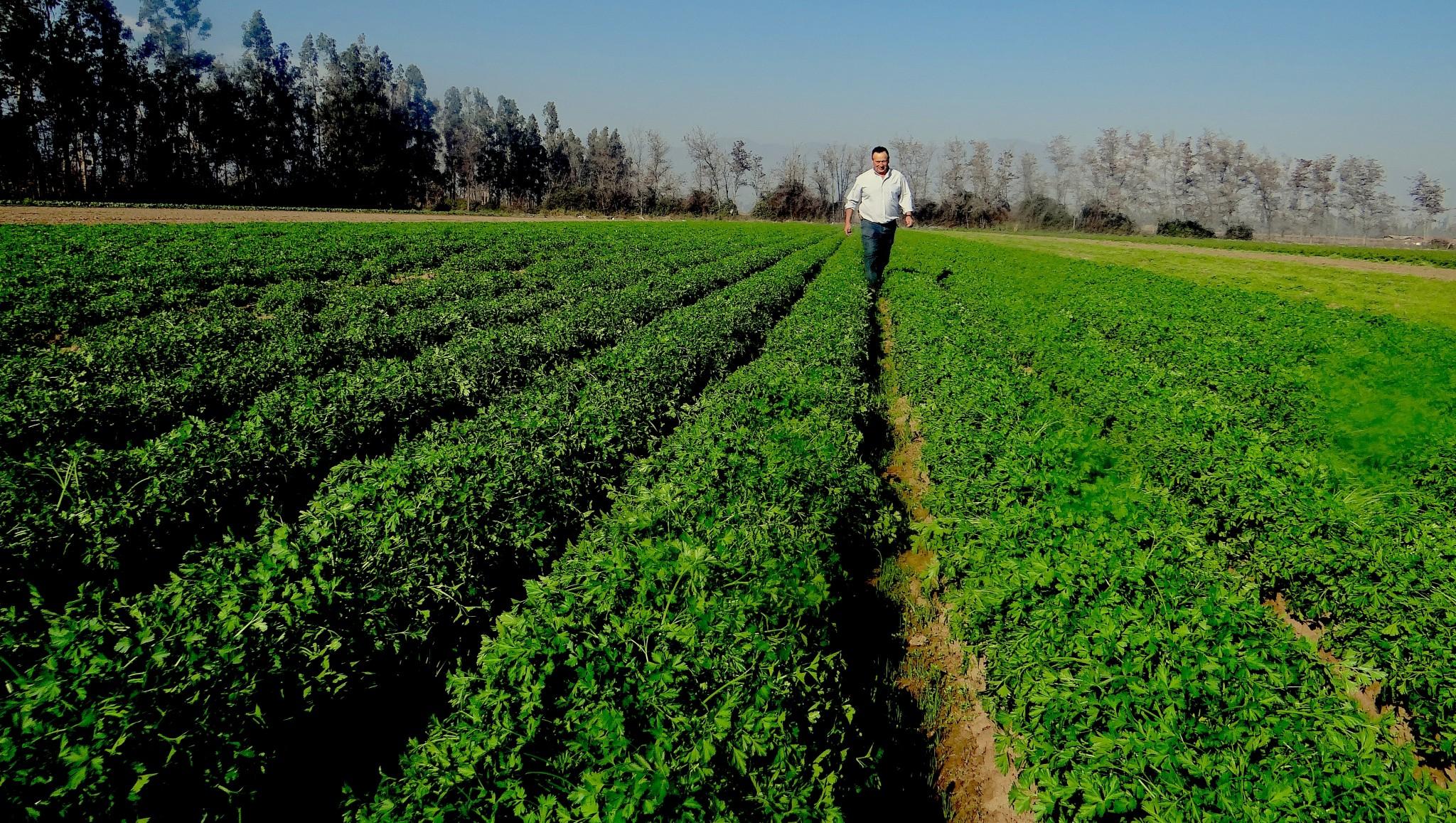 Bachelet: Medida beneficiará a 30 mil productores agrícolas