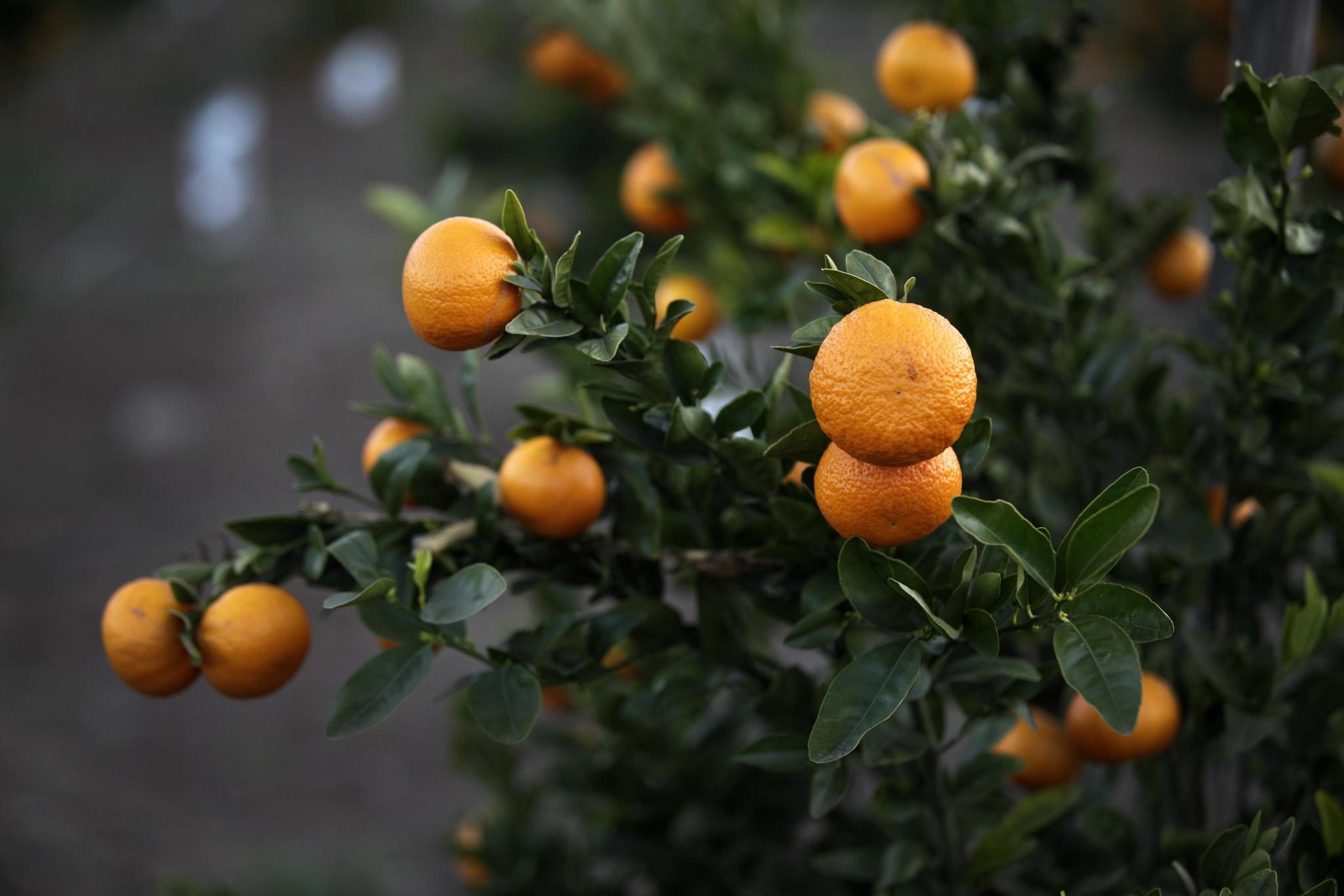 Odepa amplía la captura de precios de frutas y hortalizas a la IV y V región
