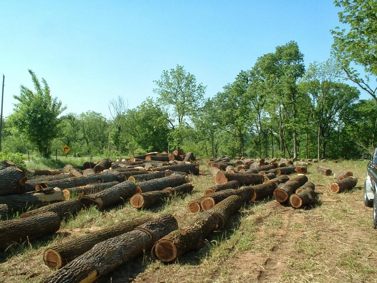 Envíos agrícolas y forestales lideran exportaciones a Corea del Sur