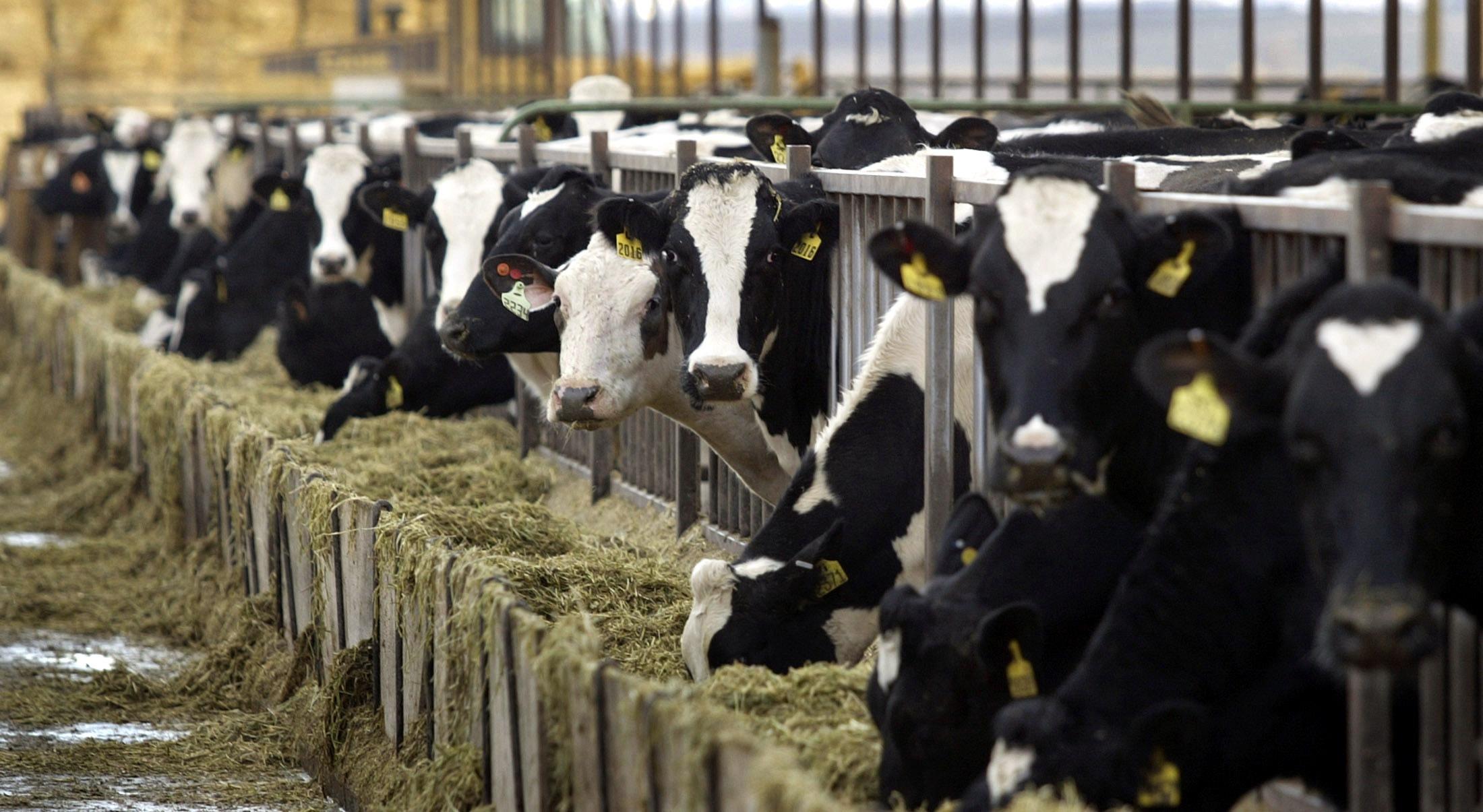 Lácteos: Estadísticas del comercio exterior
