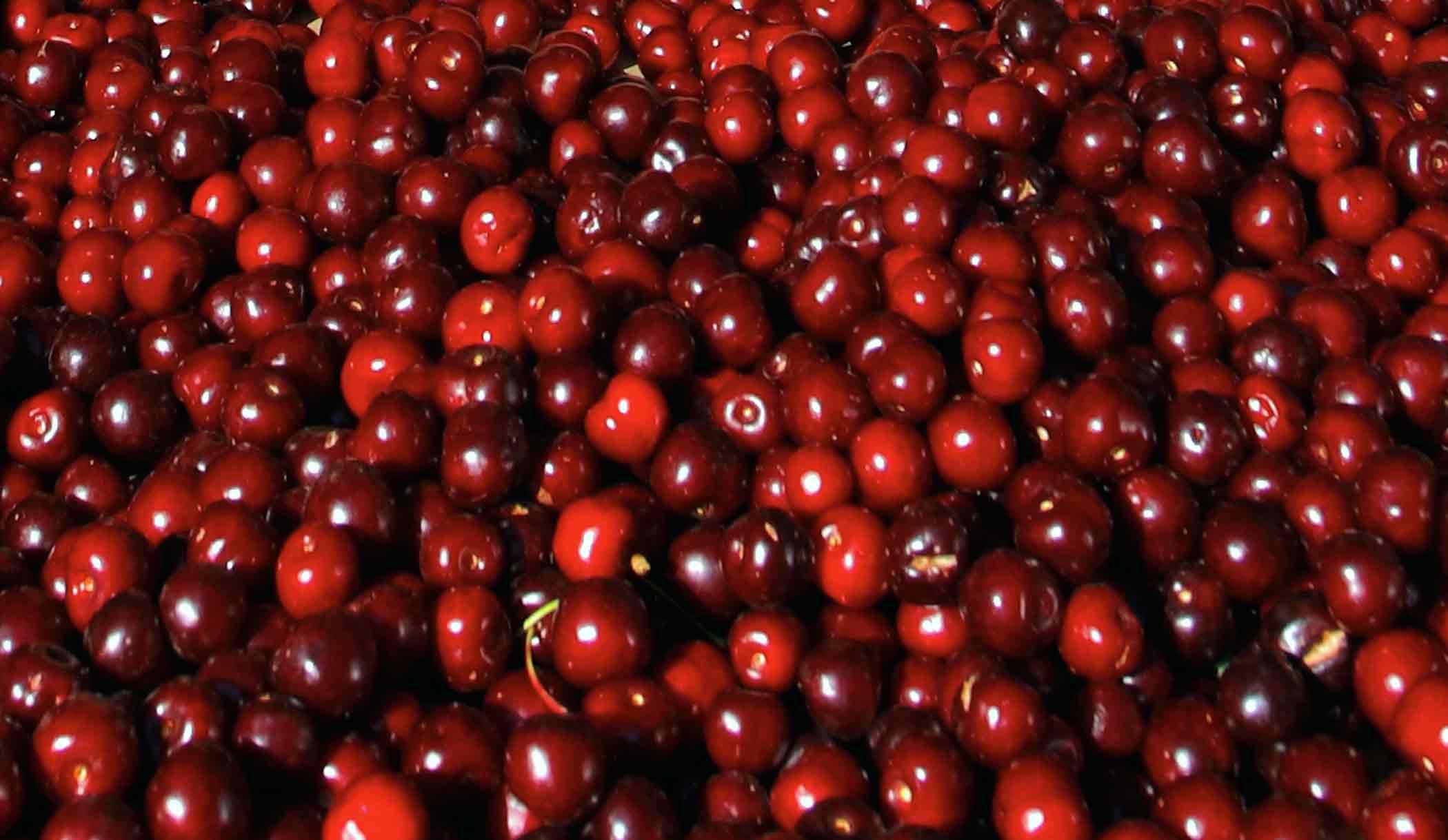 Importante avance para ingreso de cerezas chilenas al mercado coreano