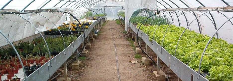 Invernadero climatizado con energía geotérmica reduce costos energéticos y mejora  producción