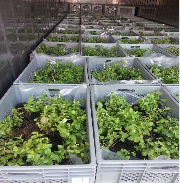 SAG actualiza normativa de viveros y depósitos de plantas para la racionalización del uso de nematicidas