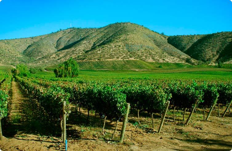 Indap busca fortalecer condiciones productivas de maiceros del Valle Central