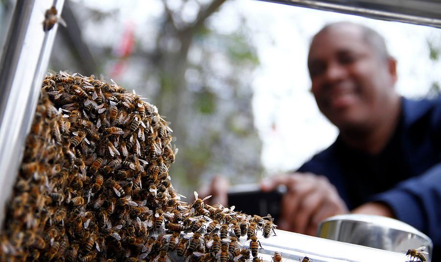 Fiscalizan en terreno muerte de abejas en Molina