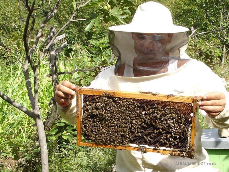 Más de un centenar de productores de miel exportarán a los mercados más exigentes