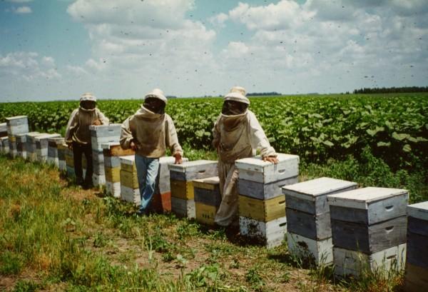 Preocupación en Francia por baja cosecha de miel en 2014