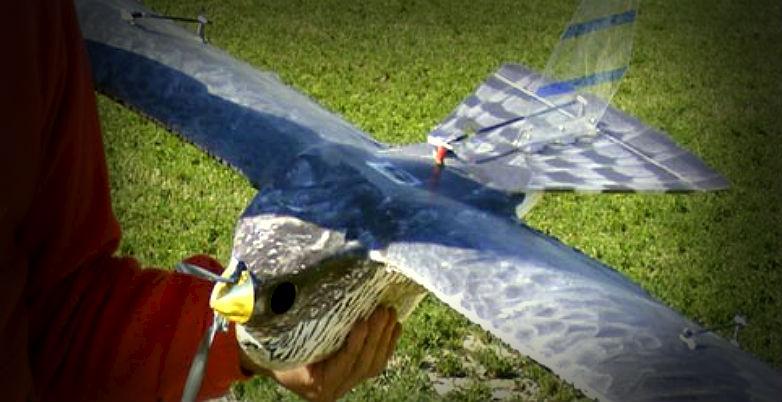 Drones biomiméticos: Alternativa para ahuyentar a pájaros que perjudican en el campo
