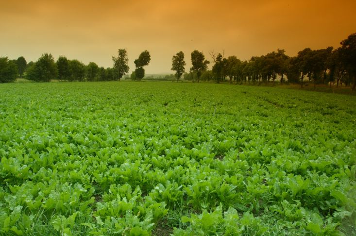 Desarrollan software que permite al productor calcular 15 indicadores ambientales