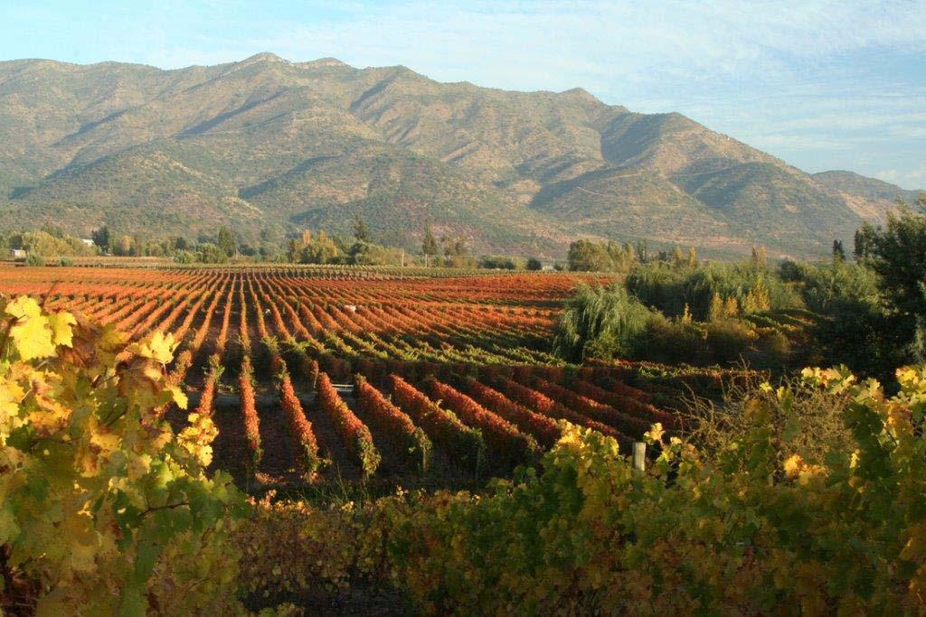Viñas de Colchagua refuerza su excelencia en descorchados