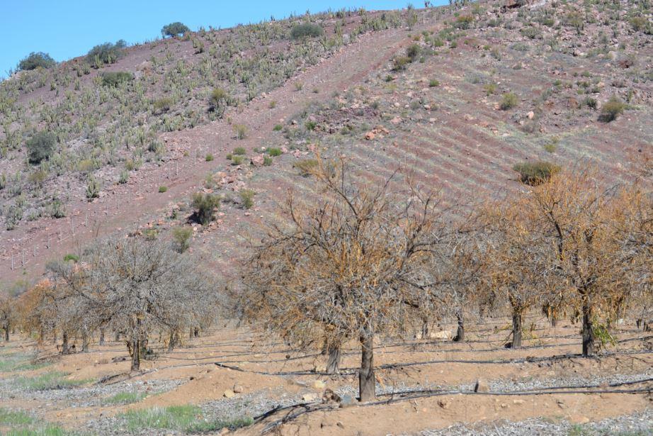 """Experto en riego sobre la sequía en el norte: """"hay que ajustar la superficie"""""""
