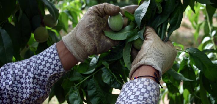 Agenda laboral enfocada al agro se enmarcará dentro del Estatuto Temporero
