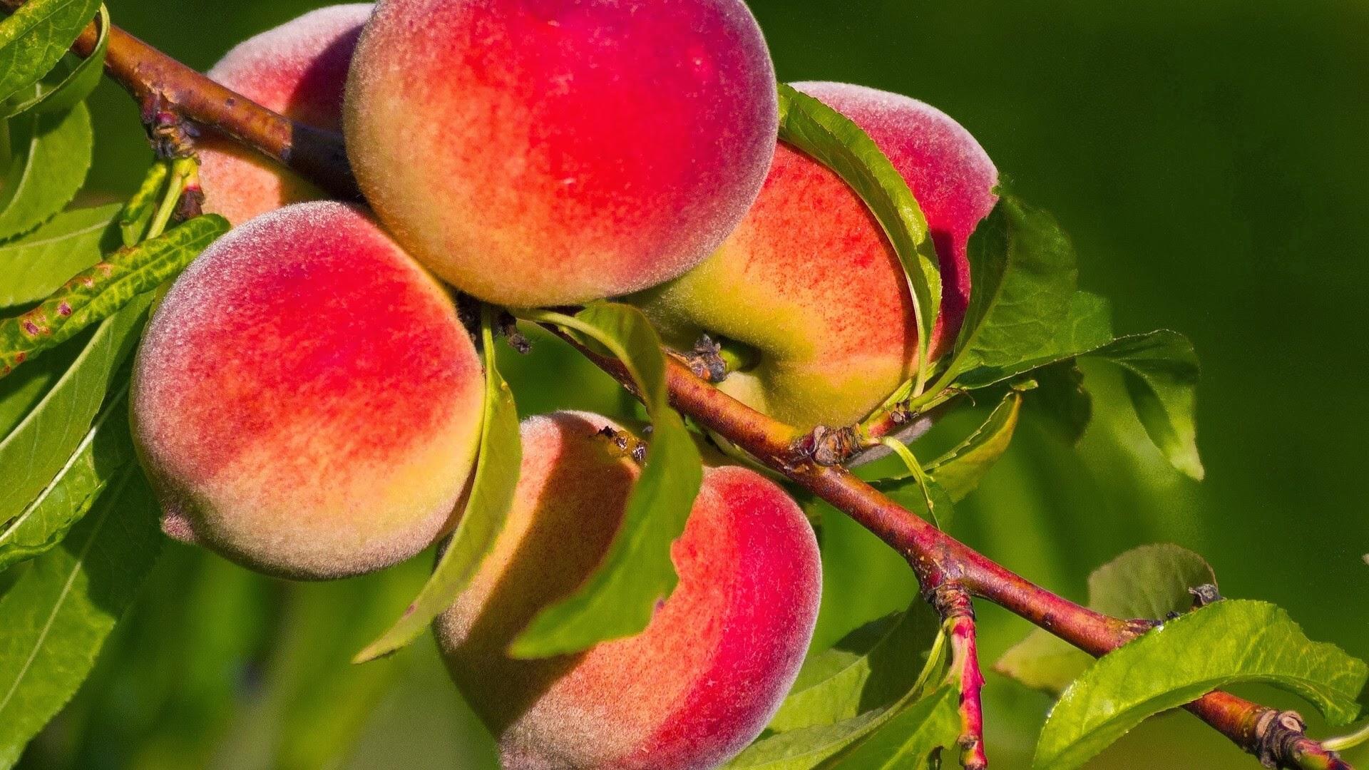 Se inicia campaña de promoción de la fruta chilena en Europa