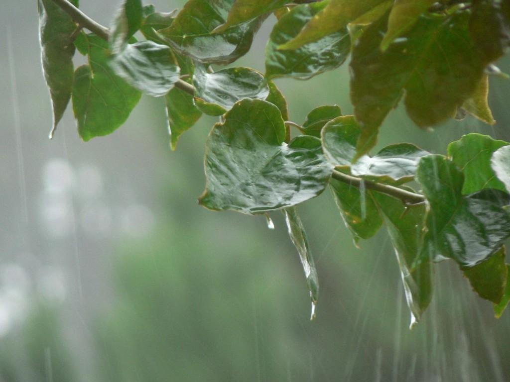 Sistema frontal podría dejar hasta 10 milímetros de agua en regiones productoras