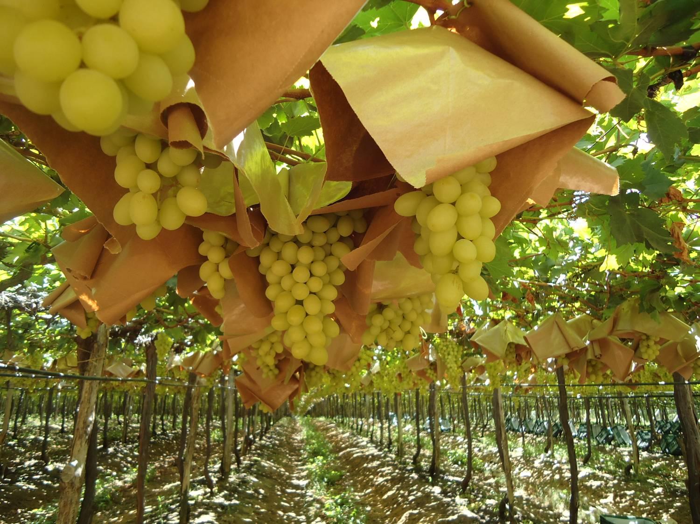 La Ruta del Vino llega al celular a través de ChileVisit