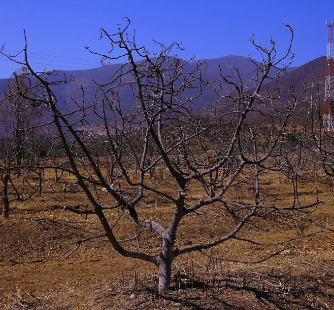 Al borde del mate: sequía mantiene a productores agrícolas de Coquimbo en jaque