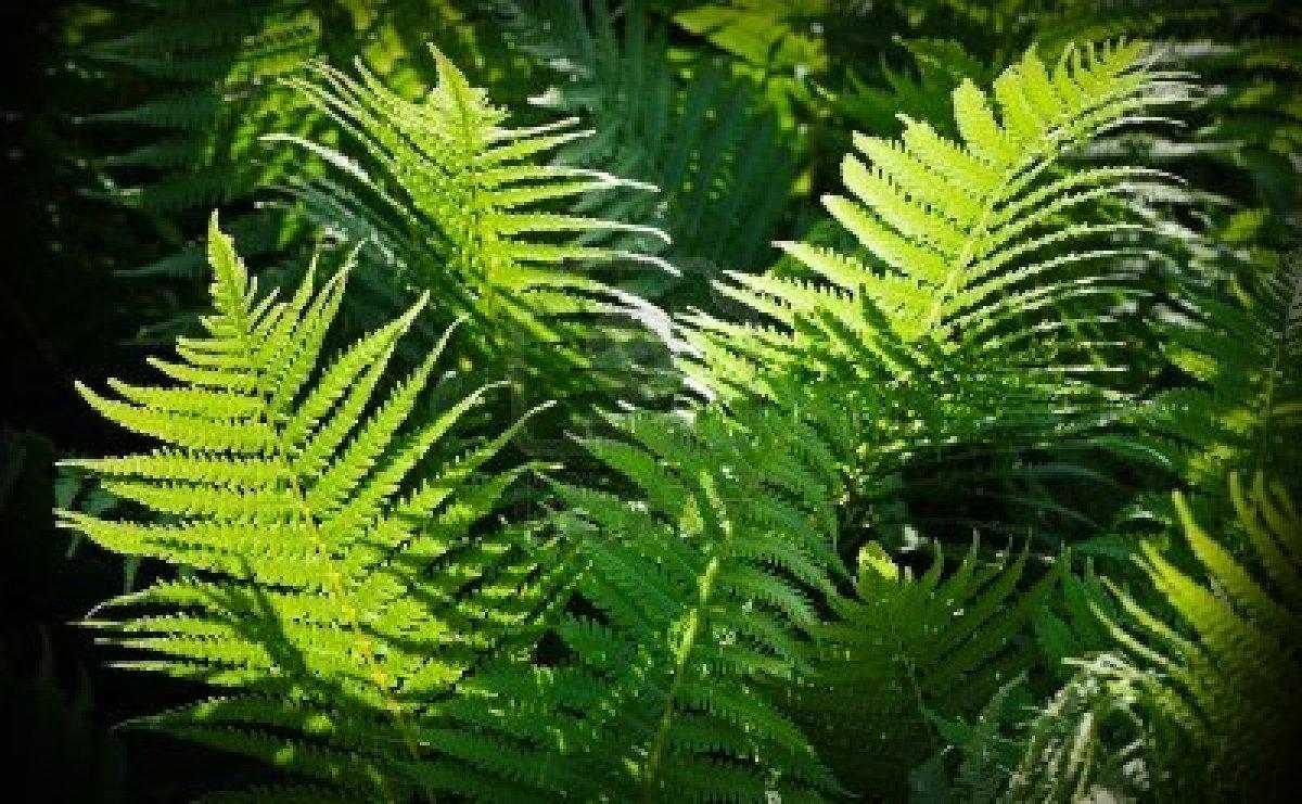 """""""Las plantas son inteligentes y toman decisiones en un tiempo más largo"""""""