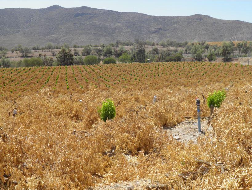 Sequía en Coquimbo: 60% de los cultivos ya no tiene cómo recibir agua