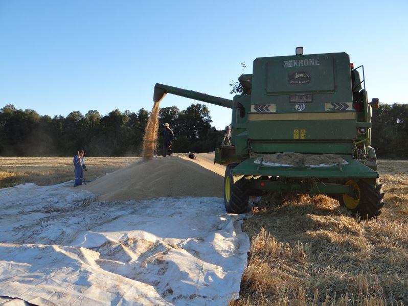 SOFO verifica aplicación del reglamento del trigo