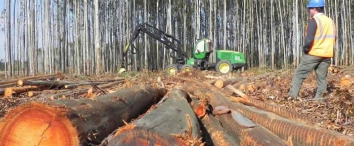 Exportaciones forestales chilenas alcanzan un récord histórico en 2014