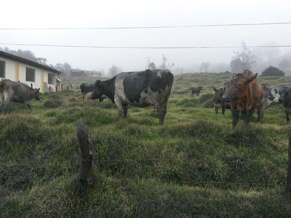 Volcán Calbuco: Productores deben adelantar entrega de forraje