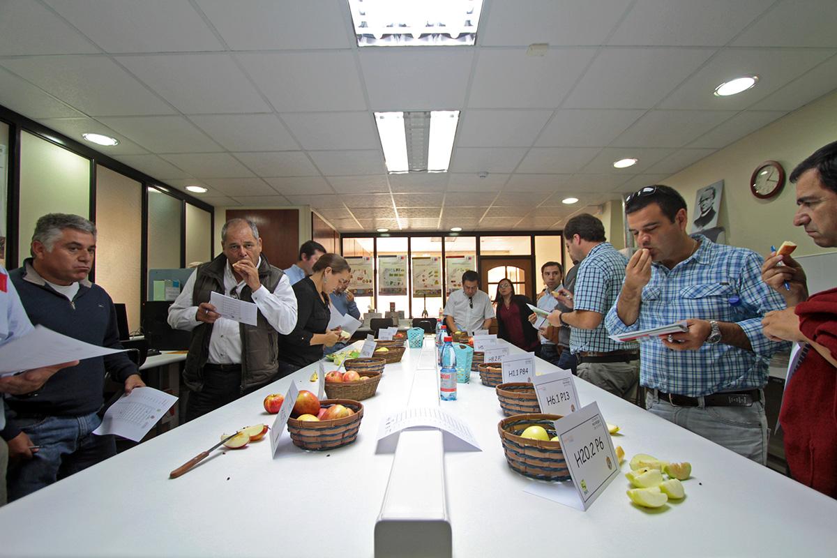 Presentan avances en variedades de manzanas chilenas para la industria de exportación