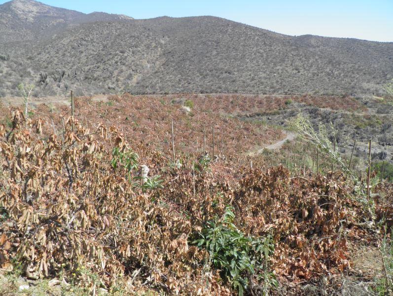 SAN solicitará al Gobierno medidas más inmediatas frente a sequía