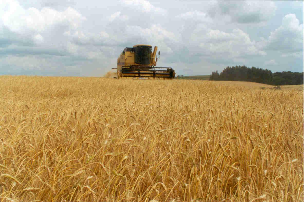 El trigo manda