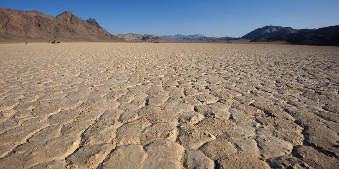Sequía en California: 6.000 hectáreas de cítricos arrancadas
