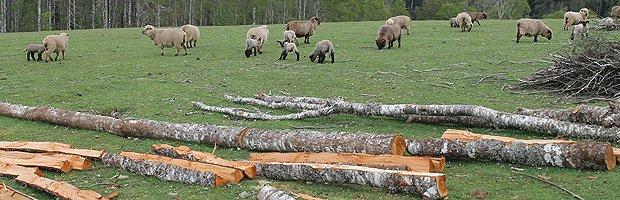 Definen prioridades en diferentes áreas forestales