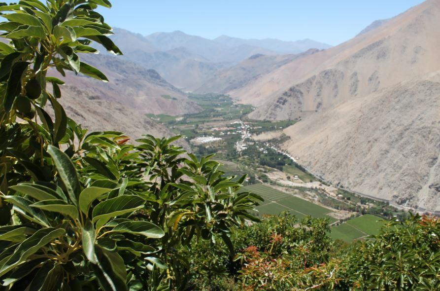 Cerca del 50% de los canales de la cuenca del Choapa y Limarí están obstruidos