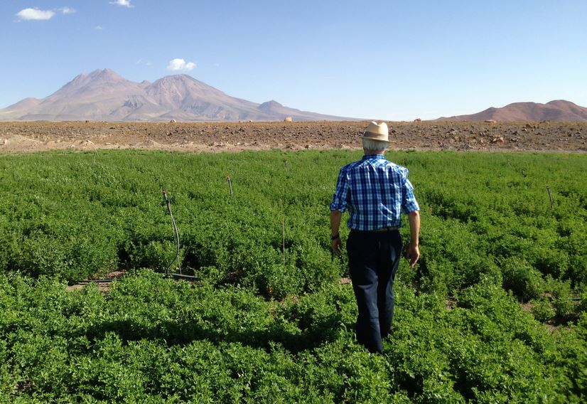 ¿Falta discutir sobre la sustentabilidad de la agricultura en Chile?