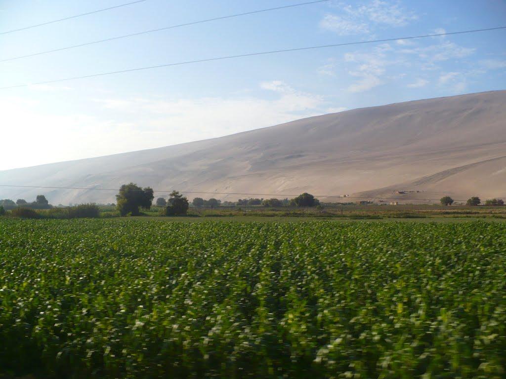 Horticultores del Valle de Lluta buscan mejorar productividad