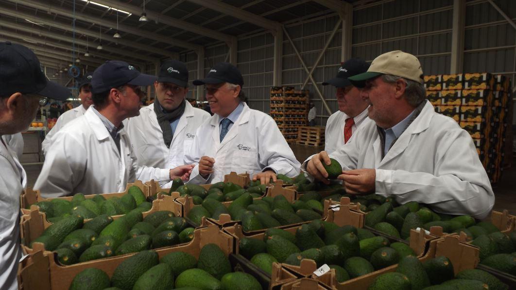 Mosca de la fruta: China levanta medidas cuarentenarias para regiones chilenas