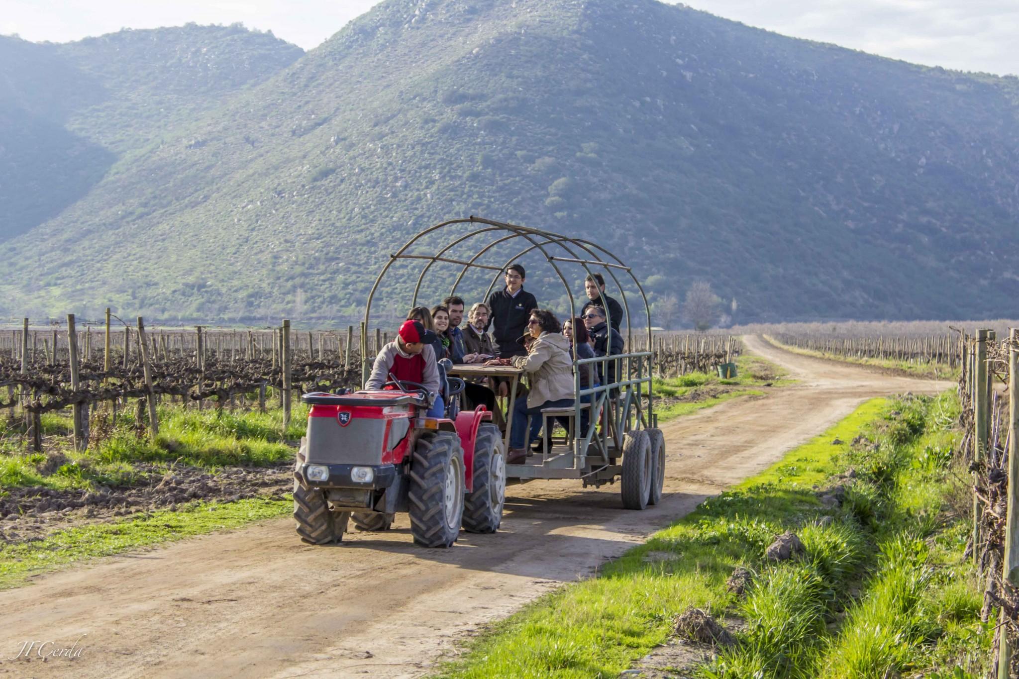 Terramater lanza versión de su tour en coloso con degustación de vinos y aceite de oliva