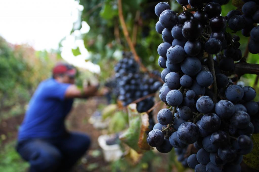 Chile lleva exportado 33 millones de litros más de vino que en 2014
