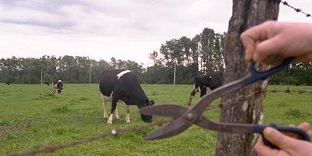 ¿No es rentable?: La grave situación que afecta a productores lecheros