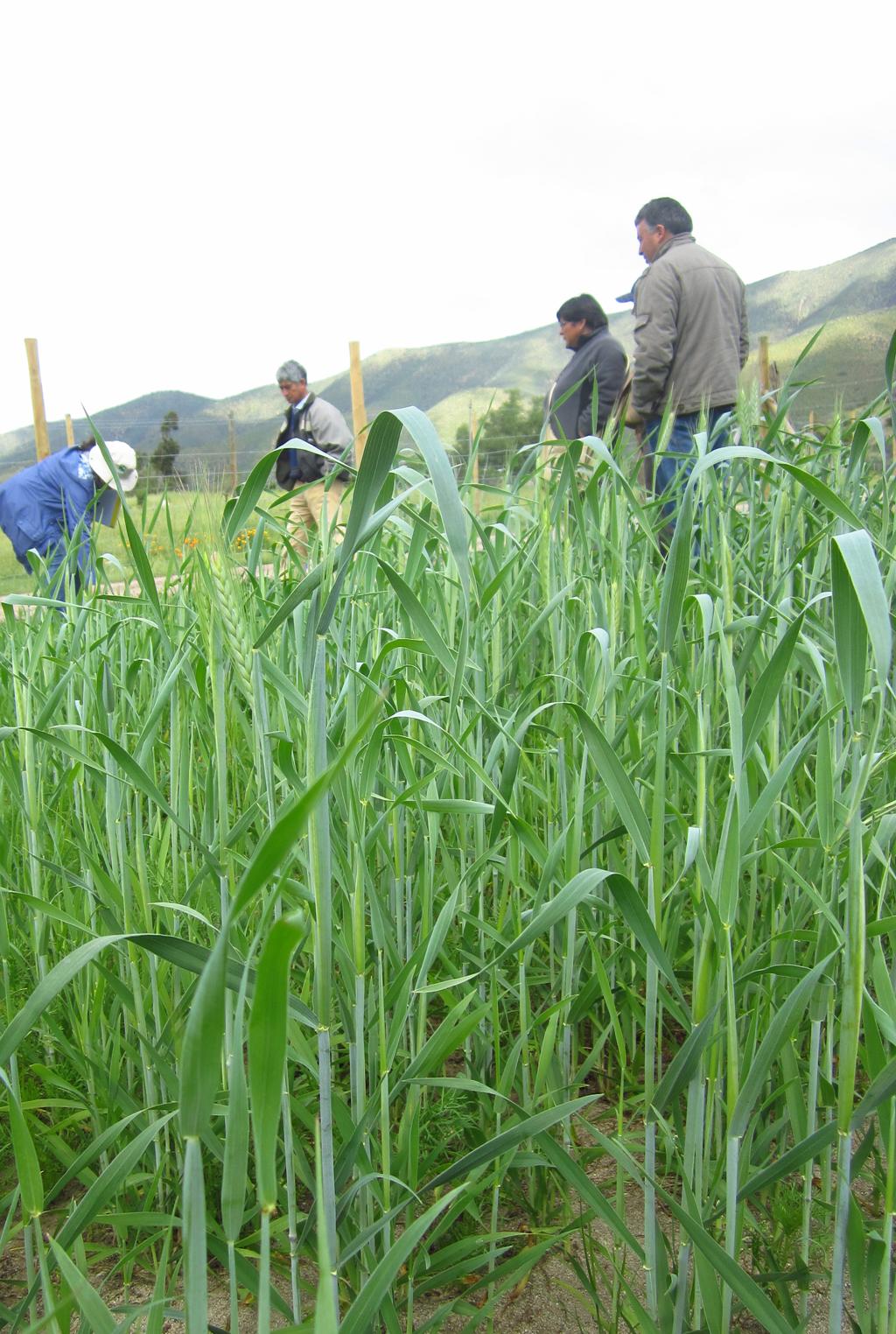 El verde de Palquico sorprende en el corazón de la provincia de Petorca
