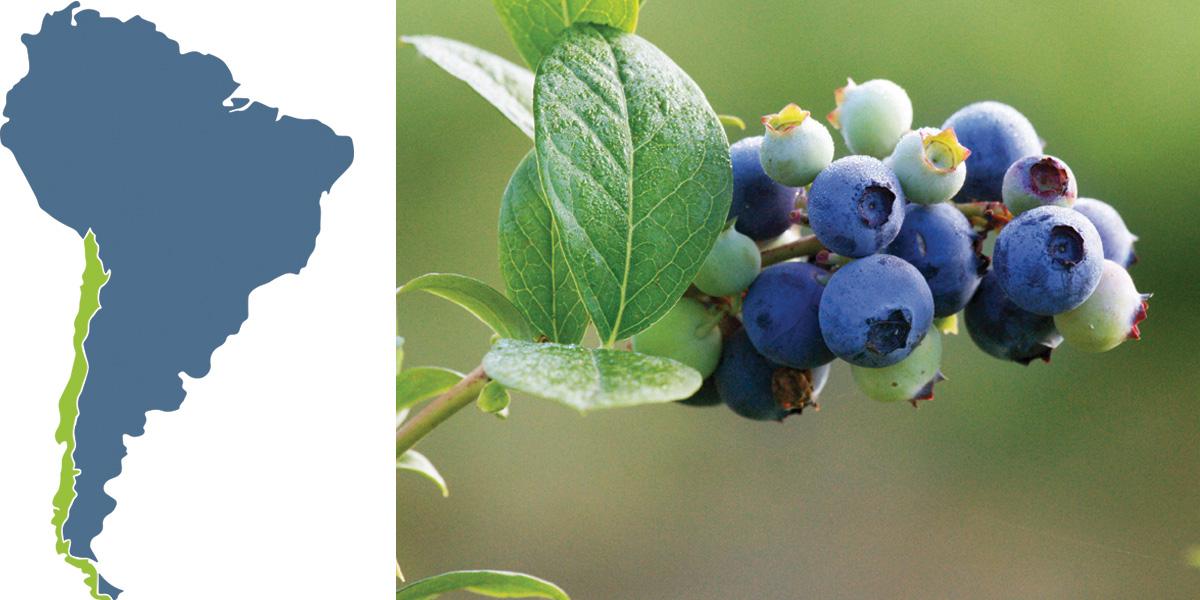 La creativa campaña con que la fruta chilena intenta conquistar Europa