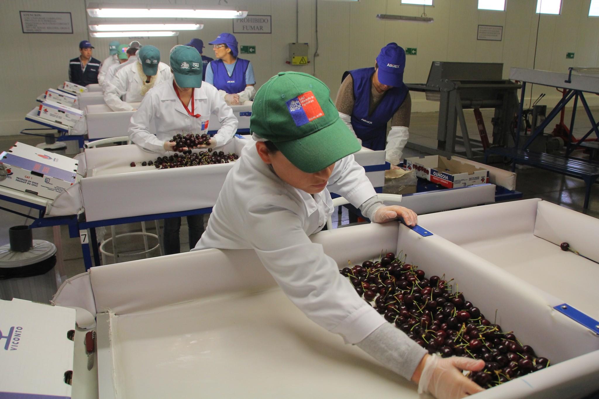 Corea del Sur abre su mercado a cerezas frescas chilenas