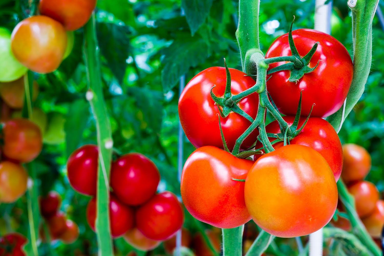 Agricultores del valle de azapa aprende sobre el uso de fertilizantes