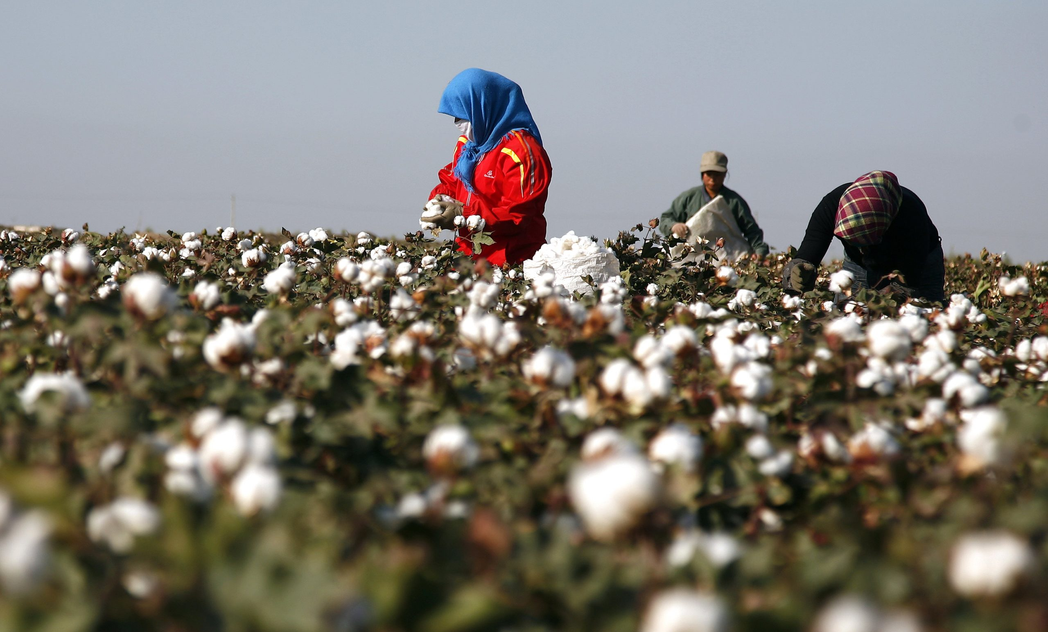 India: La guerra del algodón