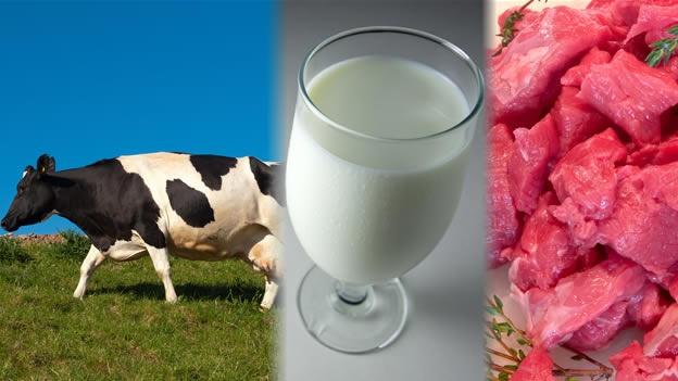 ¿Cuál es el rol de los productos animales en la Ley de etiquetado de alimentos?