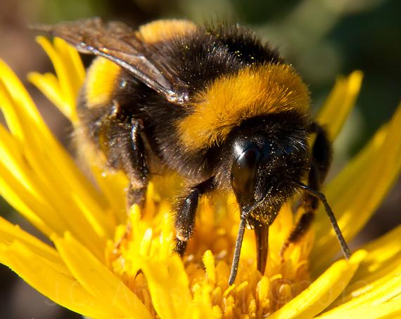Especialistas preocupados por el destino de los insectos polinizadores en Chile