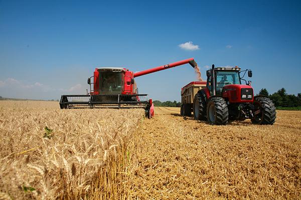 Industria del trigo busca alternativas para aumentar el valor
